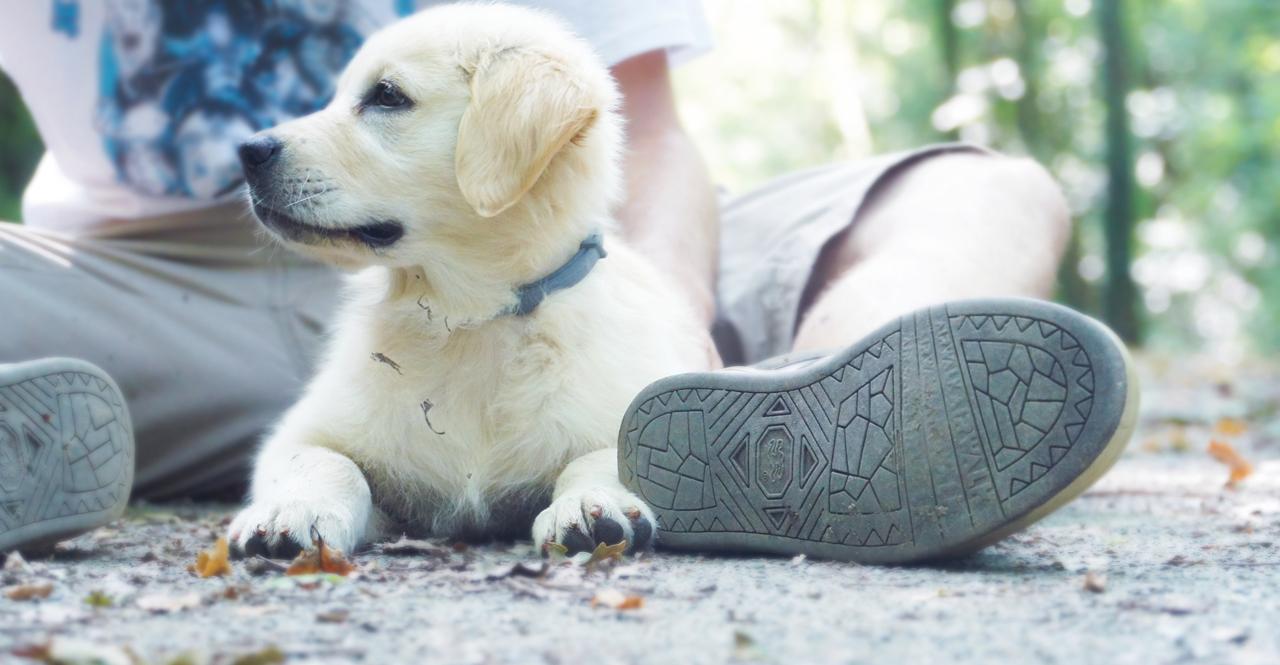 飼い犬と人の写真