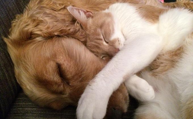 犬と猫のイメージ写真