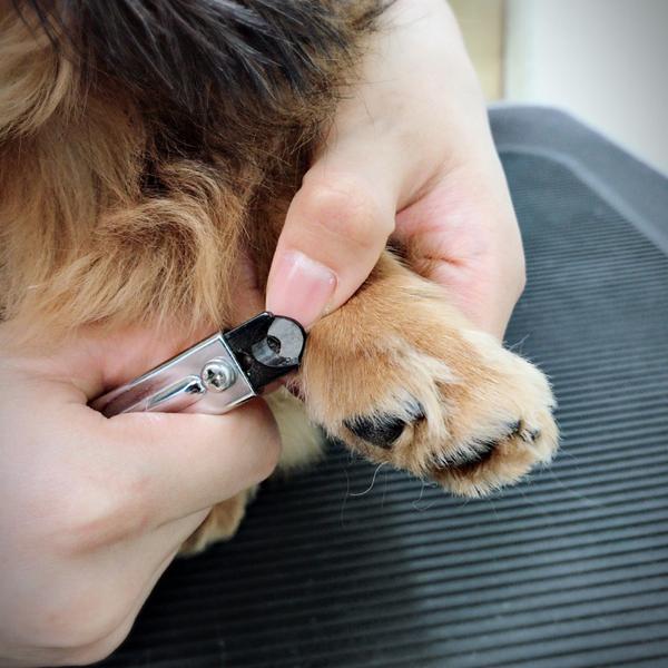 爪切りの写真